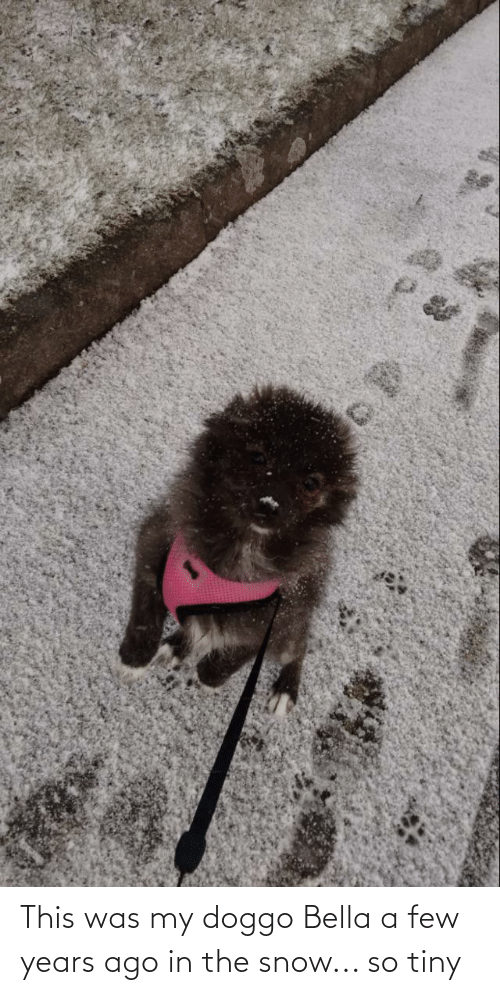 bella: This was my doggo Bella a few years ago in the snow... so tiny