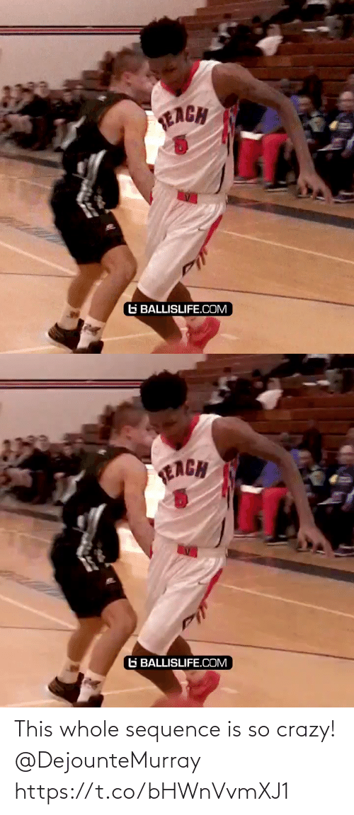 Whole: This whole sequence is so crazy! @DejounteMurray https://t.co/bHWnVvmXJ1