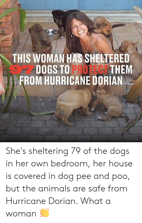 Hurricane: THIS WOMAN HAS SHELTERED  DOGS TO PROFEG THEM  FROM HURRICANE DORIAN She's sheltering 79 of the dogs in her own bedroom, her house is covered in dog pee and poo, but the animals are safe from Hurricane Dorian. What a woman 👏