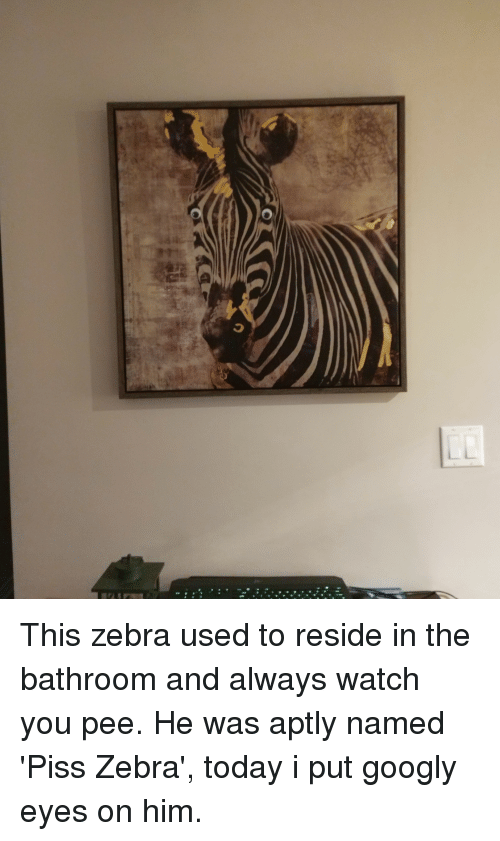 reside: This zebra used to reside in the bathroom and always watch you pee. He was aptly named 'Piss Zebra', today i put googly eyes on him.