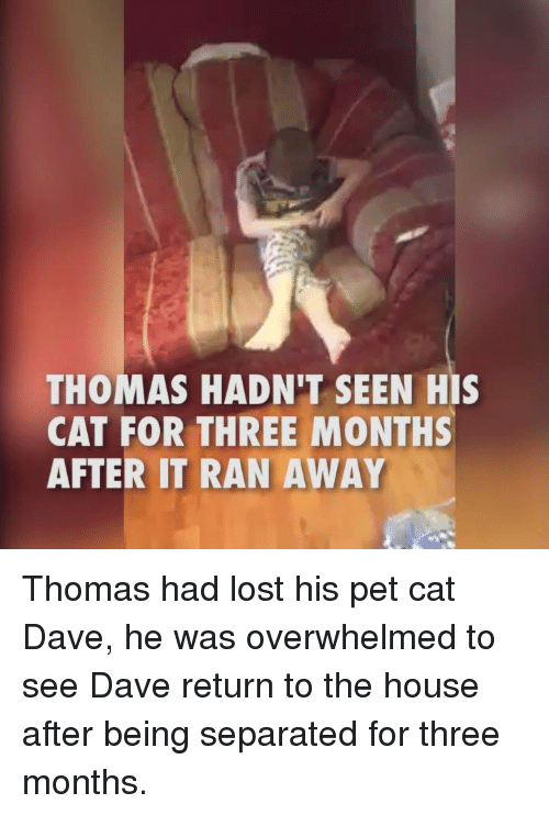 Petting Cat: THOMAS HADN'T SEEN HIS  CAT FOR THREE MONTHS  AFTER IT RAN AWAY Thomas had lost his pet cat Dave, he was overwhelmed to see Dave return to the house after being separated for three months.