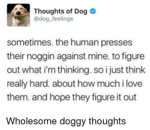 Love, Wholesome, and Figure It Out: Thoughts of Dog  @dog feelings  edog-feelngs  sometimes. the human presses  their noggin against mine. to figure  out what i'm thinking. so i just think  really hard. about how much i love  them. and hope they figure it out Wholesome doggy thoughts