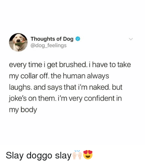 Im Naked: Thoughts of Dog  @dog_feelings  every time i get brushed. i have to take  my collar off. the human always  laughs. and says that i'm naked. but  joke's on them. i'm very confident in  my body Slay doggo slay🙌🏻😍