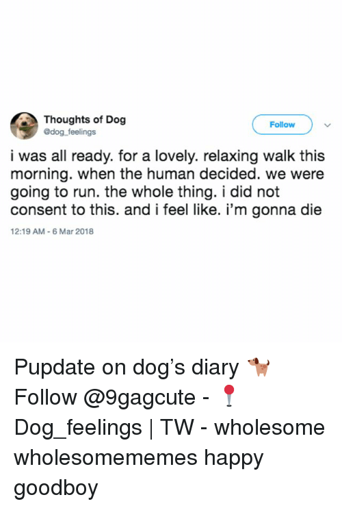Memes, Run, and Happy: Thoughts of Dog  @dog feelings  Follow  i was all ready. for a lovely. relaxing walk this  morning. when the human decided. we were  going to run. the whole thing. i did not  consent to this. and i feel like. i'm gonna die  12:19 AM-6 Mar 2018 Pupdate on dog's diary 🐕 Follow @9gagcute - 📍Dog_feelings | TW - wholesome wholesomememes happy goodboy