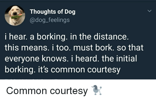 Borking: Thoughts of Dog  @dog_feelings  i hear, a borking. in the distance.  this means. i too. must bork. so that  everyone knows. i heard. the initial  borking. it's common courtesy <p>Common courtesy 🐩</p>