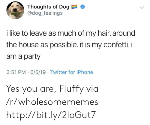 Iphone, Party, and Twitter: Thoughts of Dog  @dog_feelings  i like to leave as much of my hair. around  the house as possible. it is my confetti. i  am a party  2:51 PM 6/5/19 Twitter for iPhone Yes you are, Fluffy via /r/wholesomememes http://bit.ly/2IoGut7