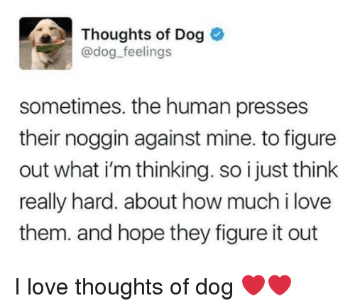 Love, Figure It Out, and Hope: Thoughts of Dog  @dog feelings  sometimes. the human presses  their noggin against mine. to figure  out what i'm thinking. so i just think  really hard. about how much i love  them. and hope they figure it out I love thoughts of dog ❤️❤️