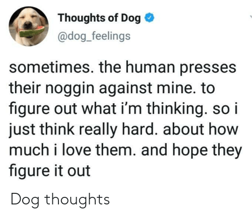 Love, Figure It Out, and Hope: Thoughts of Dog  @dog_feelings  sometimes. the human presses  their noggin against mine. to  figure out what i'm thinking. so i  just think really hard. about how  much i love them. and hope they  figure it out Dog thoughts