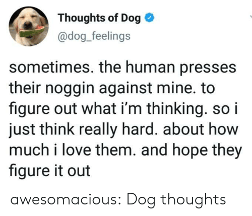 Dog Dog: Thoughts of Dog  @dog_feelings  sometimes. the human presses  their noggin against mine. to  figure out what i'm thinking. so i  just think really hard. about how  much i love them. and hope they  figure it out awesomacious:  Dog thoughts
