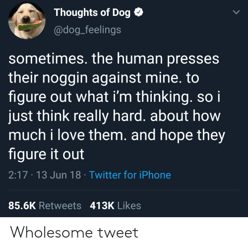 Iphone, Love, and Twitter: Thoughts of Dog  @dog_feelings  sometimes. the human presses  their noggin against mine. to  figure out what i'm thinking. soi  just think really hard. about how  much i love them. and hope they  figure it out  2:17 13 Jun 18 Twitter for iPhone  85.6K Retweets 413K Likes Wholesome tweet