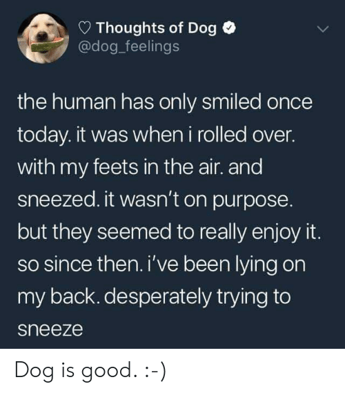 Dog Dog: Thoughts of Dog  @dog_feelings  the human has only smiled once  today. it was when i rolled over.  with my feets in the air. and  sneezed. it wasn't on purpose  but they seemed to really enjoy it.  so since then. i've been lying on  my back. desperately trying to  sneeze Dog is good. :-)
