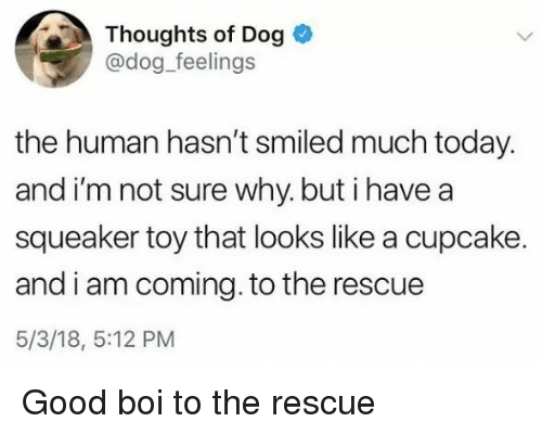 I Am Coming: Thoughts of Dog  @dog_feelings  the human hasn't smiled much today.  and i'm not sure why. but i havea  squeaker toy that looks like a cupcake.  and i am coming. to the rescue  5/3/18, 5:12 PM <p>Good boi to the rescue</p>