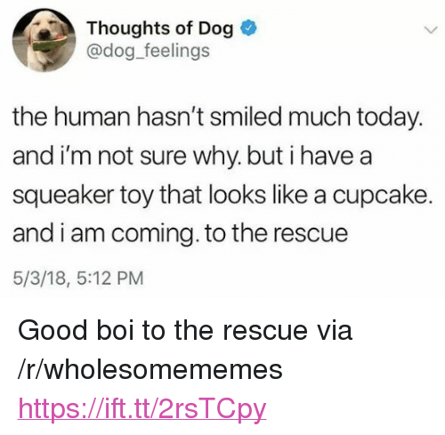 "I Am Coming: Thoughts of Dog  @dog_feelings  the human hasn't smiled much today.  and i'm not sure why. but i havea  squeaker toy that looks like a cupcake.  and i am coming. to the rescue  5/3/18, 5:12 PM <p>Good boi to the rescue via /r/wholesomememes <a href=""https://ift.tt/2rsTCpy"">https://ift.tt/2rsTCpy</a></p>"