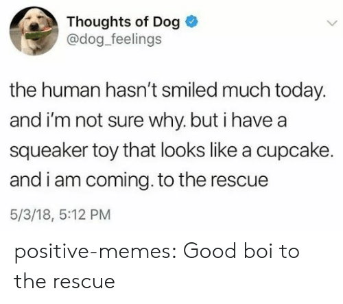 I Am Coming: Thoughts of Dog  @dog_feelings  the human hasn't smiled much today.  and i'm not sure why. but i havea  squeaker toy that looks like a cupcake.  and i am coming. to the rescue  5/3/18, 5:12 PM positive-memes: Good boi to the rescue