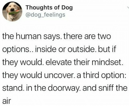 elevate: Thoughts of Dog  @dog_feelings  the human says. there are two  options.. inside or outside. but if  they would. elevate their mindset.  they would uncover. a third option:  stand. in the doorway. and sniff the  air