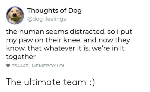 Dog Dog: Thoughts of Dog  @dog_feelings  the human seems distracted. so i put  my paw on their knee. and now they  know. that whatever it is. we're in it  together  雙234443 | MEMEBOX.LOL The ultimate team :)