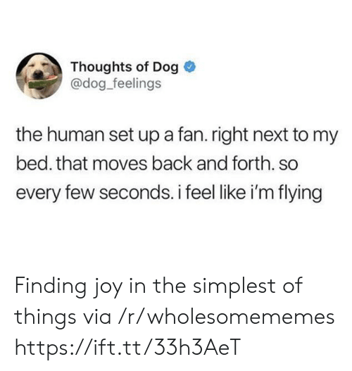 Back, Joy, and Dog: Thoughts of Dog  @dog_feelings  the human set up a fan. right next to my  bed. that moves back and forth. so  every few seconds. i feel like i'm flying Finding joy in the simplest of things via /r/wholesomememes https://ift.tt/33h3AeT