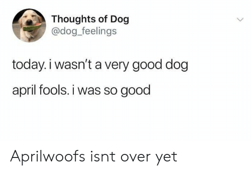 Dog Dog: Thoughts of Dog  @dog_feelings  today.i wasn't a very good dog  april fools. i was so good Aprilwoofs isnt over yet