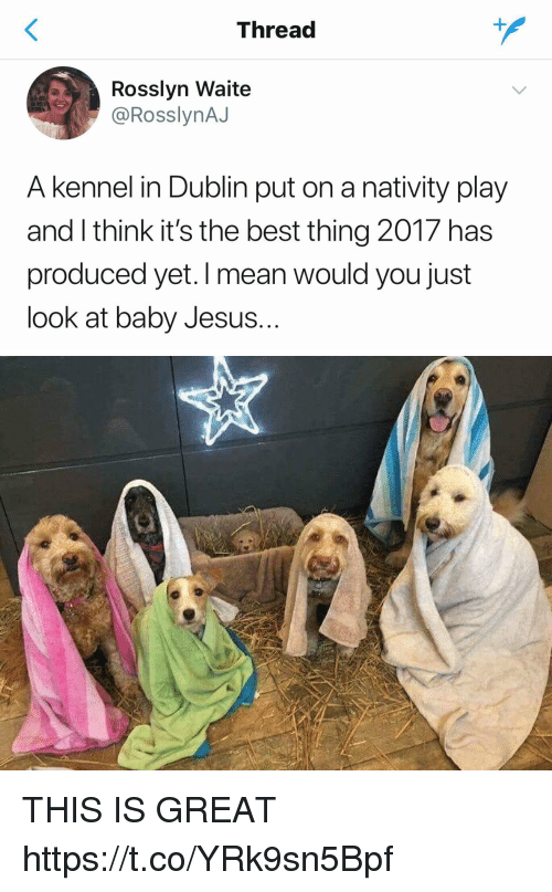 nativity: Thread  Rosslyn Waite  @RosslynAJ  A kennel in Dublin put on a nativity play  and I think it's the best thing 2017 has  produced yet. I mean would you just  look at baby Jesus.. THIS IS GREAT https://t.co/YRk9sn5Bpf