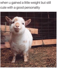 Good Personality