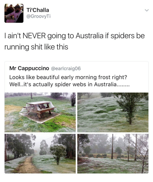 cappuccino: Ti Challa  @GroovyTi  I ain't NEVER going to Australia if spiders be  running shit like this  Mr Cappuccino @earlcraigo6  Looks like beautiful early morning frost right?
