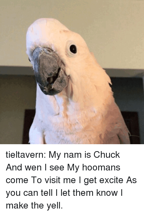 Excite: tieltavern:  My nam is Chuck And wen I see My hoomans come To visit me  I get excite  As you can tell I let them know I make the yell.