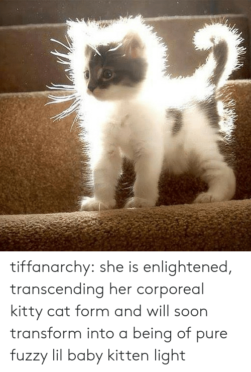Lil Baby: tiffanarchy: she is enlightened, transcending her corporeal kitty cat form and will soon transform into a being of pure fuzzy lil baby kitten light