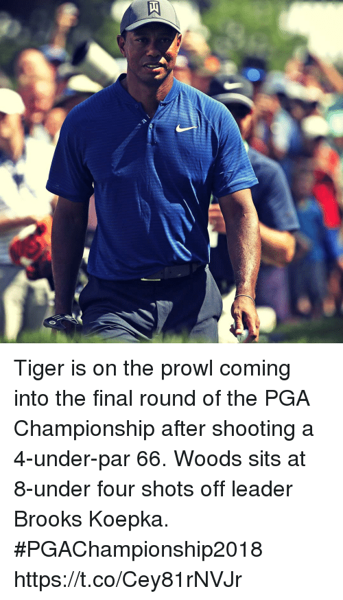 Memes, Tiger, and 🤖: Tiger is on the prowl coming into the final round of the PGA Championship after shooting a 4-under-par 66. Woods sits at 8-under four shots off leader Brooks Koepka. #PGAChampionship2018 https://t.co/Cey81rNVJr