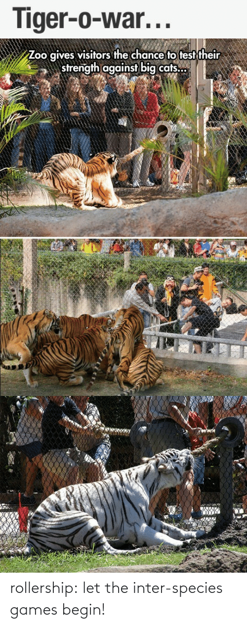 Games Begin: Tiger-o-war...   Zoo gives visitors the chance to test their  strength against big cats.. rollership:  let the inter-species games begin!