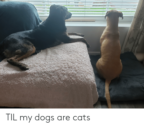 Cats, Dogs, and Til: TIL my dogs are cats