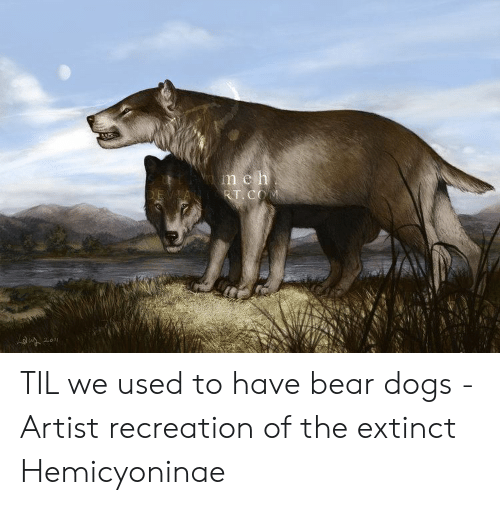 Dogs, Bear, and Artist: TIL we used to have bear dogs - Artist recreation of the extinct Hemicyoninae