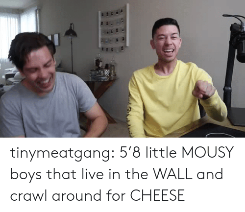 crawl: tinymeatgang:  5'8 little MOUSY boys that live in the WALL and crawl around for CHEESE