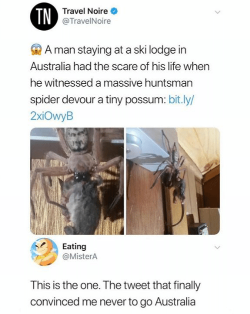 devour: TN  Travel Noire  @TravelNoire  A man staying at a ski lodge in  Australia had the scare of his life when  he witnessed a massive huntsman  spider devour a tiny possum: bit.ly/  2xiOwyB  Eating  @MisterA  This is the one. The tweet that finally  convinced me never to go Australia