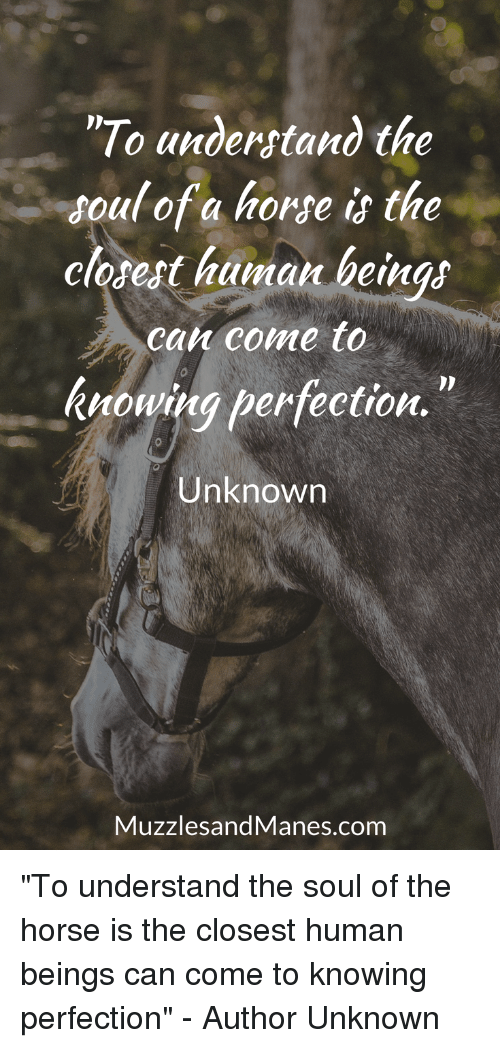 """Horse, Human, and Com: """"To anderstand the  soul of a horse is the  closest human beings  ca come to  knowing perfection.  Unknown  MuzzlesandManes.com """"To understand the soul of the horse is the closest human beings can come to knowing perfection"""" - Author Unknown"""