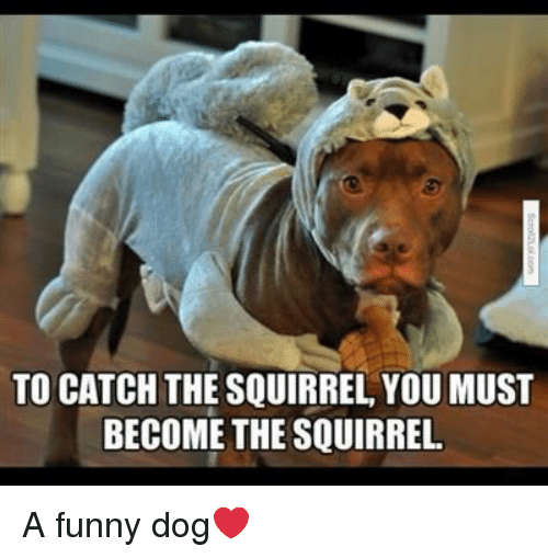Funny, Squirrel, and Dog: TO CATCH THE SQUIRREL, YOU MUST  BECOME THE SQUIRREL A funny dog❤