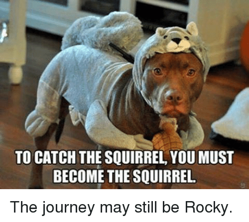 Rockies: TO CATCH THE SQUIRREL YOUMUST  BECOME THE SQUIRREL The journey may still be Rocky.