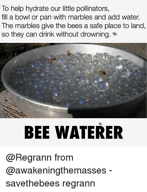 scarlette: To help hydrate our little pollinators,  fill a bowl or pan with marbles and add water.  The marbles give the bees a safe place to land,  so they can drink without drowning.  nes Scarlett  BEE WATERER @Regrann from @awakeningthemasses - savethebees regrann
