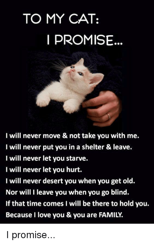 Memes, I Love You, and Being There: TO MY CAT:  PROMISE  I will never move & not take you with me.  I will never put you in a shelter & leave.  I will never let you starve.  I will never let you hurt.  I will never desert you when you get old.  Nor will I leave you when you go blind.  If that time comes I will be there to hold you.  Because I love you & you are FAMILY. I promise...