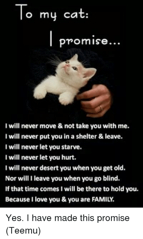 Memes, 🤖, and Desert: To my cat  Promise...  will never move & not take you with me.  I will never put you in a shelter & leave.  I will never let you starve.  I will never let you hurt.  I will never desert you when you get old.  Nor will I leave you when you go blind.  If that time comes I will be there to hold you.  Because I love you & you are FAMILY. Yes. I have made this promise (Teemu)