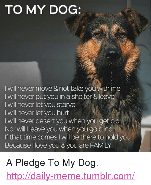 """Family, Love, and Meme: TO MY DOG:  I will never move & not take you with ime  I will never put you in a shelter & leave  I will never let you starve  I will never let you hurt  I will never desert you when you get old  Nor will l leave you when you go blind  If that time comes I will be there to hold you  Because I love you & you are FAMILY <p>A Pledge To My Dog.<br/><a href=""""http://daily-meme.tumblr.com""""><span style=""""color: #0000cd;""""><a href=""""http://daily-meme.tumblr.com/"""">http://daily-meme.tumblr.com/</a></span></a></p>"""