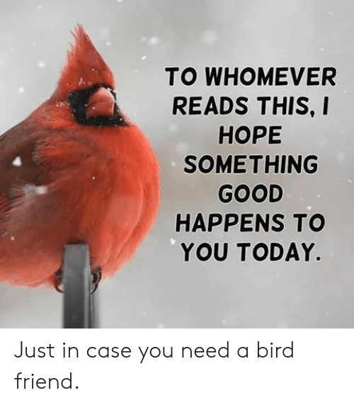 A Bird: TO WHOMEVER  READS THIS, I  НОРЕ  SOMETHING  GOOD  HAPPENS TO  YOU TODAY. Just in case you need a bird friend.