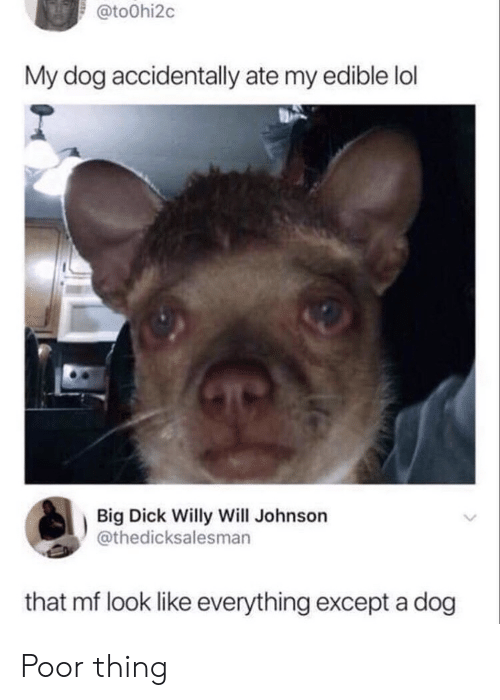 Johnson: @to0hi2c  My dog accidentally ate my edible lol  Big Dick Willy Will Johnson  @thedicksalesman  that mf look like everything except a dog Poor thing