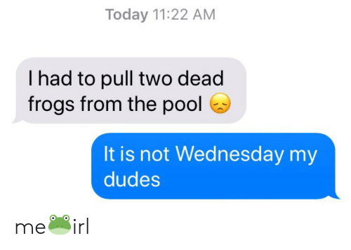 Pool, Today, and Wednesday: Today 11:22 AM  I had to pull two dead  frogs from the pool  It is not Wednesday my  dudes me🐸irl