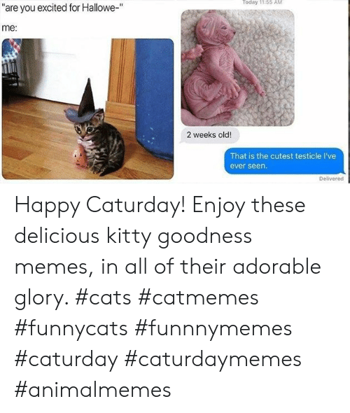 "Cats, Caturday, and Memes: Today 11:55 AM  ""are you excited for Hallowe-""  me:  2 weeks old!  That is the cutest testicle I've  ever seen.  Delivered Happy Caturday! Enjoy these delicious kitty goodness memes, in all of their adorable glory. #cats #catmemes #funnycats #funnnymemes #caturday #caturdaymemes #animalmemes"