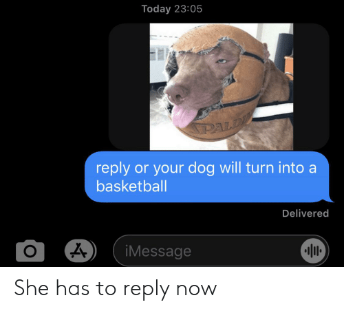 Basketball, Today, and Dog: Today 23:05  PALD  reply  or your dog will turn into a  basketball  Delivered  O  iMessage She has to reply now