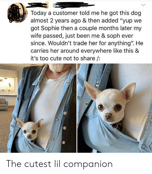 """Cute, Today, and Wife: Today a customer told me he got this dog  almost 2 years ago & then added """"yup we  got Sophie then a couple months later my  wife passed, just been me & soph ever  since. Wouldn't trade her for anything"""". He  carries her around everywhere like this &  it's too cute not to share The cutest lil companion"""