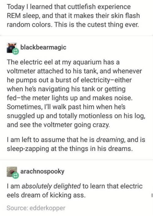 Kicking Ass: Today I learned that cuttlefish experience  REM sleep, and that it makes their skin flash  random colors. This is the cutest thing ever.  blackbearmagic  The electric eel at my aquarium has a  voltmeter attached to his tank, and whenever  he pumps out a burst of electricity-either  when he's navigating his tank or getting  fed-the meter lights up and makes noise.  Sometimes, I'll walk past him when he's  snuggled up and totally motionless on his log,  and see the voltmeter going crazy.  I am left to assume that he is dreaming, and is  sleep-zapping at the things in his dreams.  arachnospooky  I am absolutely delighted to learn that electric  eels dream of kicking ass.  Source: edderkopper