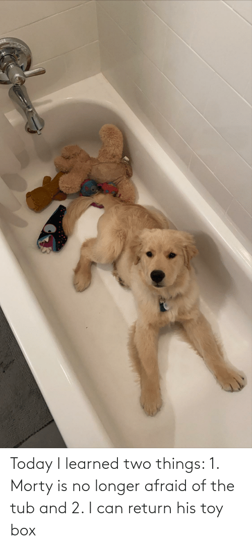 tub: Today I learned two things: 1. Morty is no longer afraid of the tub and 2. I can return his toy box