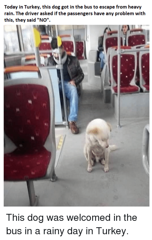 """Rain, Today, and Turkey: Today in Turkey, this dog got in the bus to escape from heavy  rain. The driver asked if the passengers have any problem with  this, they said """"NOo"""" This dog was welcomed in the bus in a rainy day in Turkey."""