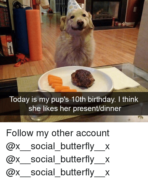 Birthday, Memes, and Butterfly: Today is my pup's 10th birthday. I think  she likes her present/dinner Follow my other account @x__social_butterfly__x @x__social_butterfly__x @x__social_butterfly__x